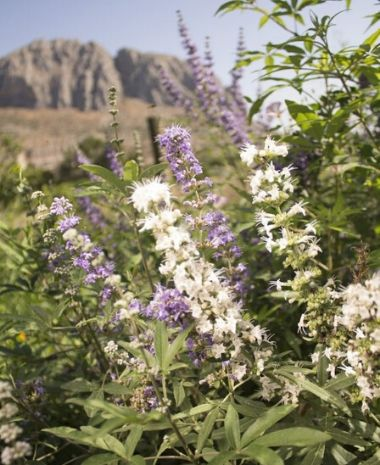 ginevitex flores blancas