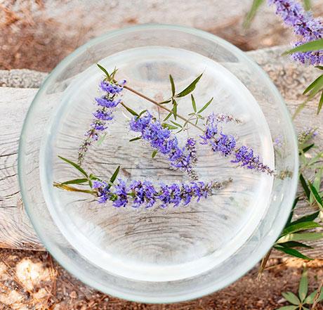 Flores Vitex Agnus Castus